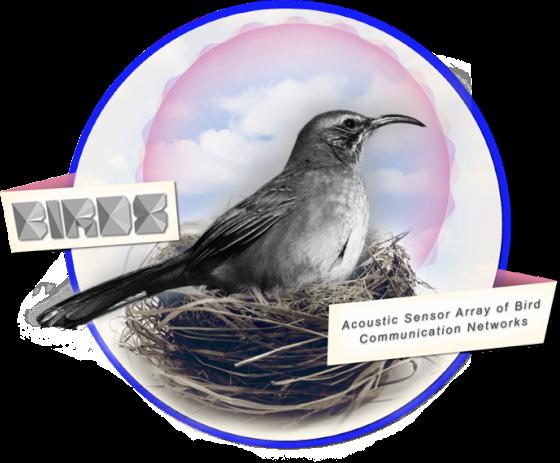 UCLA - BIRDS - ArtSci project