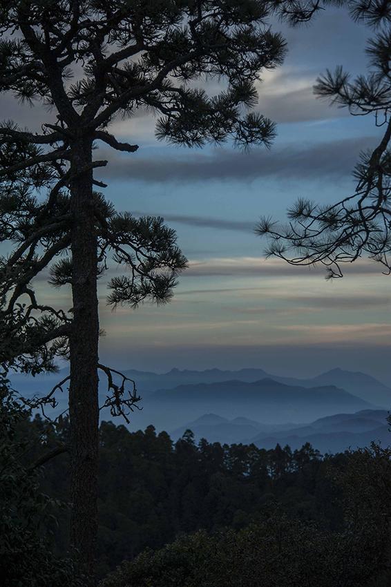 ROBERTO PEDRAZA RUIZSierra invernal. Al ocaso, las formas de pinos y coníferas se delinean en las crestas más altas de la Sierra Gorda