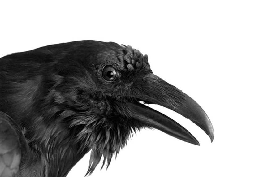 art-earth-post-raven
