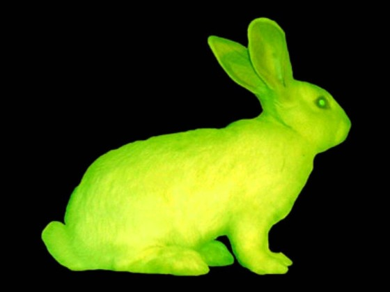 ek-green_rabbit