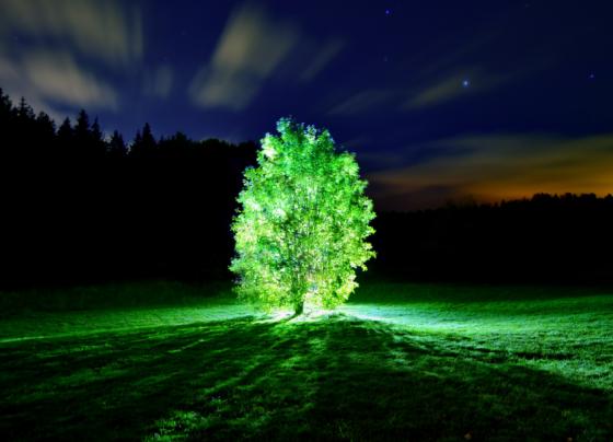 mit_bioluminiscent_trees