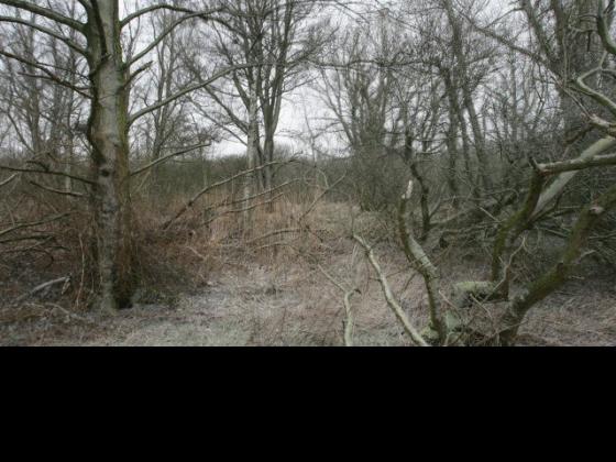 Driessens & Verstappen-LandscapeFilms