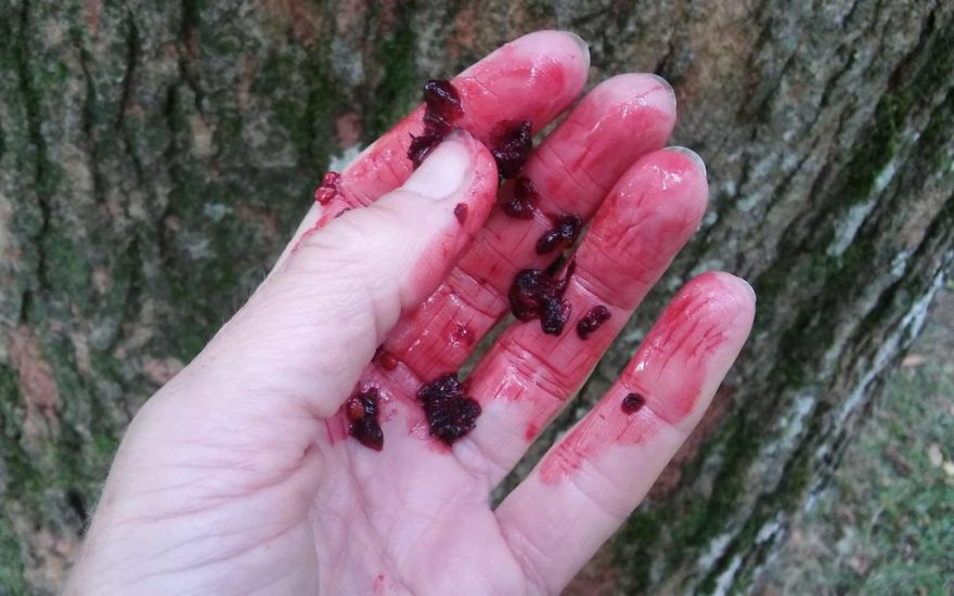 Mulberry-hand-post-image-1080x675